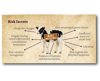 Technical bulletin: Reducing the Risk of Bloat in the Young Calf