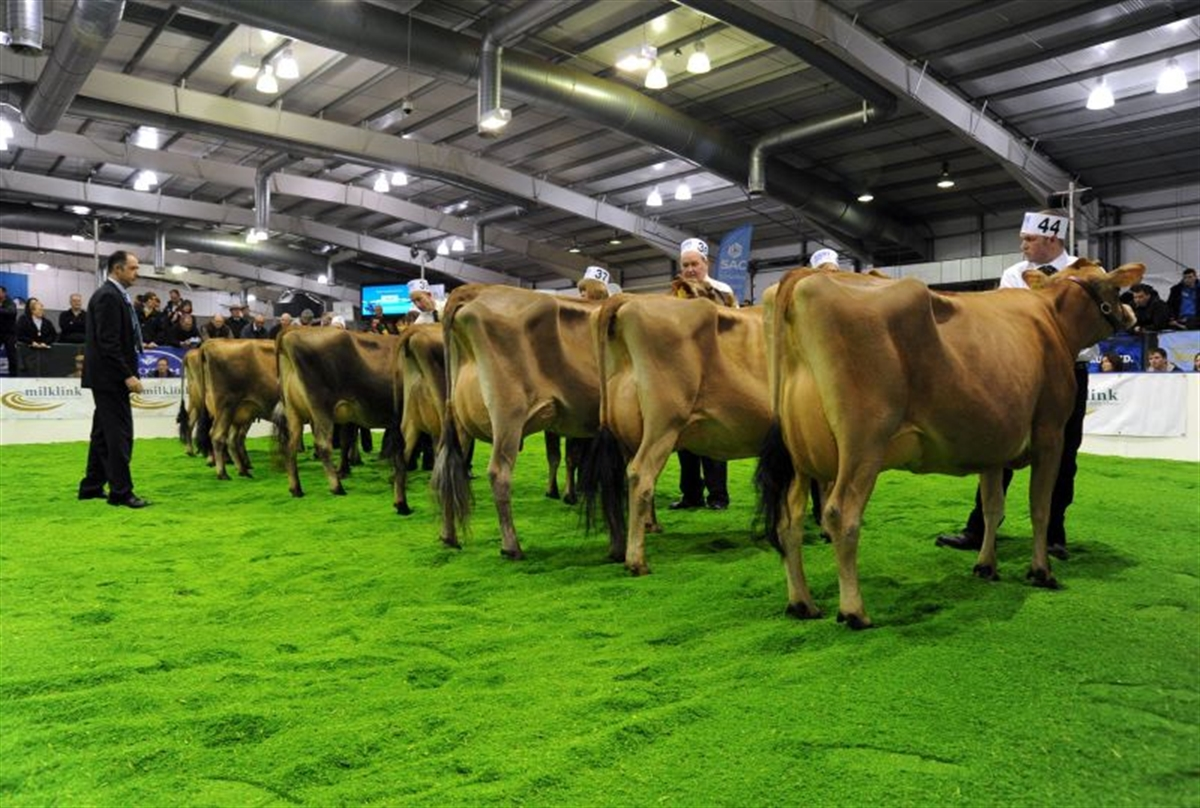 8 TOP DAIRY FARMING EVENTS TO ATTEND IN 2019/2020