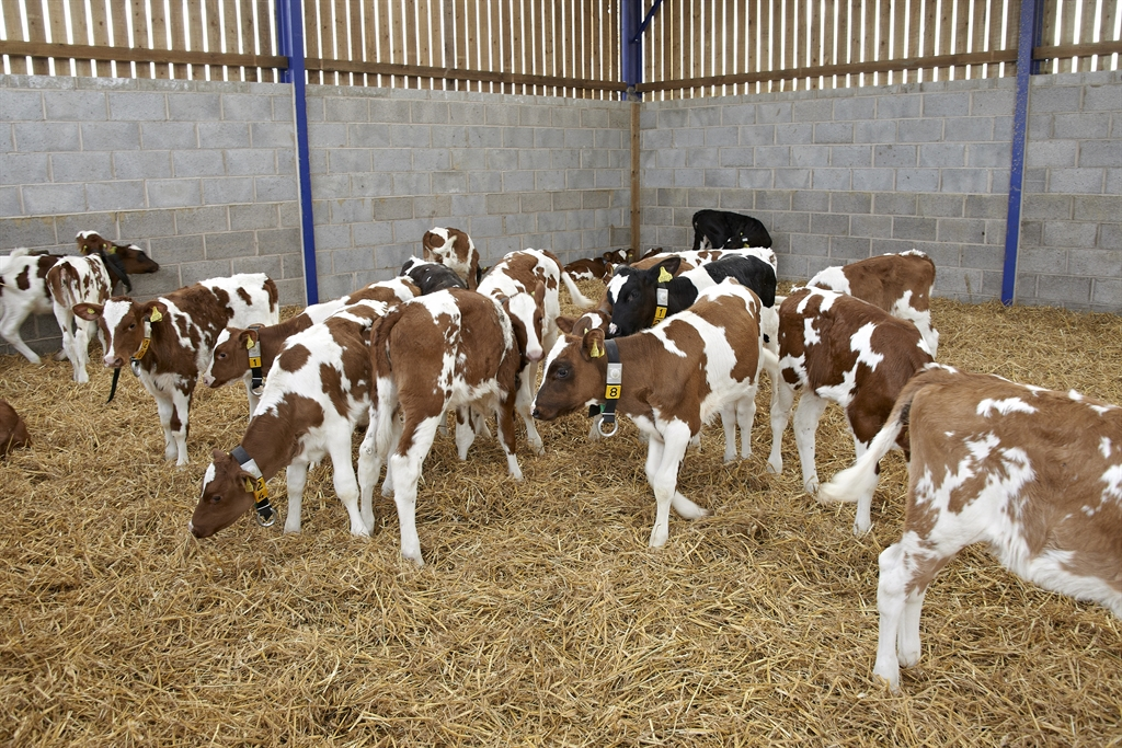 CALF HOUSING: CHANGES FOR HEALTH, HAPPINESS AND PRODUCTIVITY