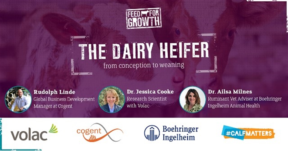 WEBINAR: The Dairy Heifer – from Conception to Weaning