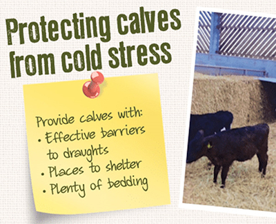 Are Your Calves At Risk in Cold Weather?